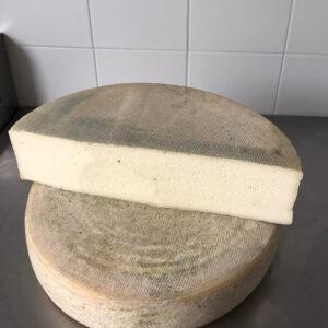 Mezza forma di formaggio Latteria stagionato